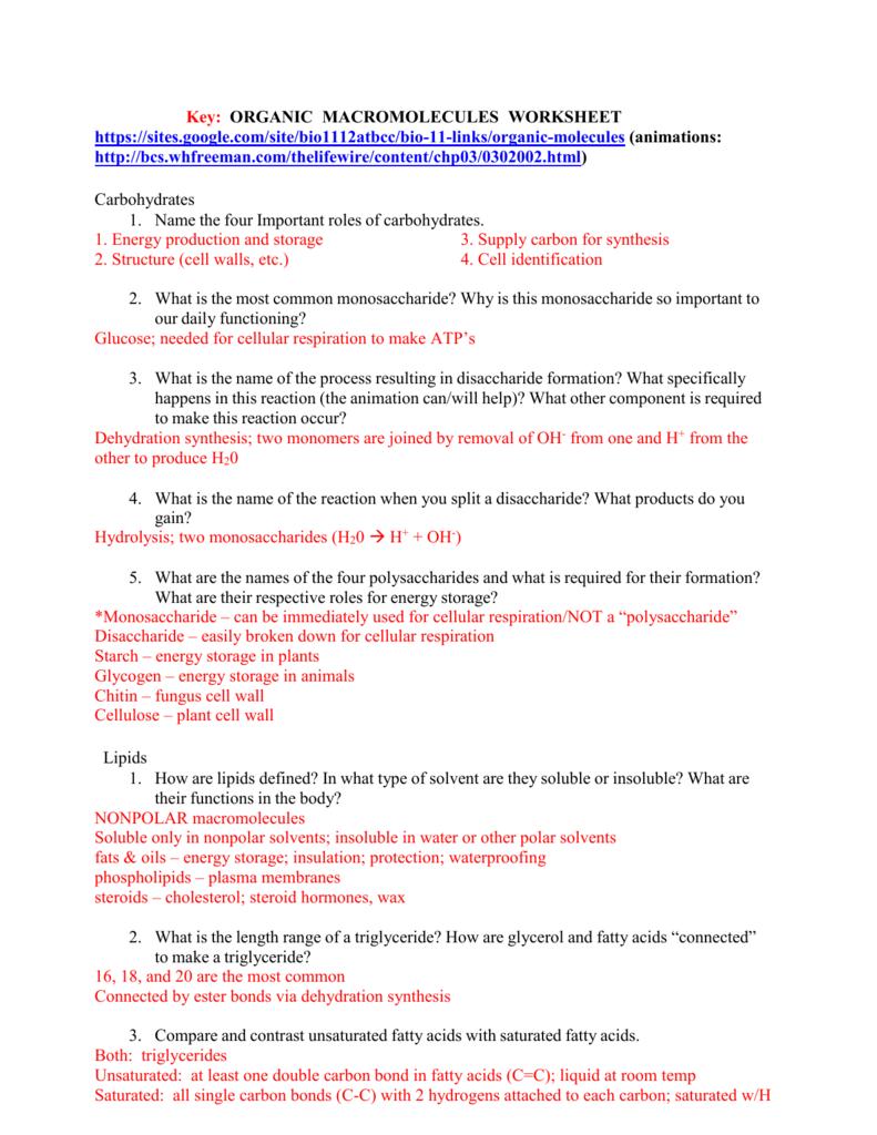 Key  Organic Macromolecules Worksheet