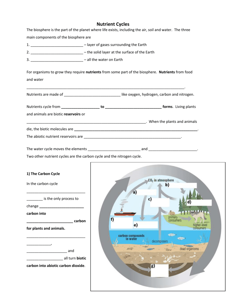 Nutrient Cycles Worksheets