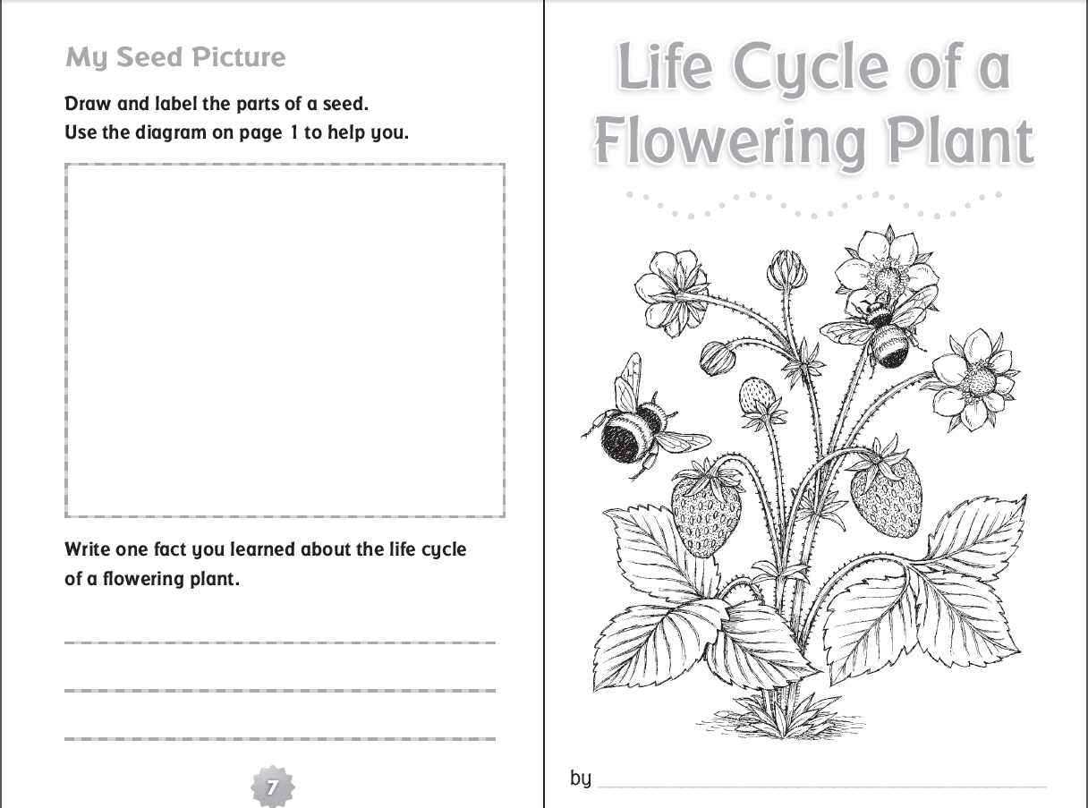 Plant Life Cycle Worksheet 3rd Grade Free Worksheets Library