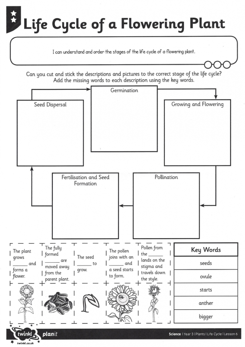 Plant Life Cycle Worksheet Free Worksheets Library
