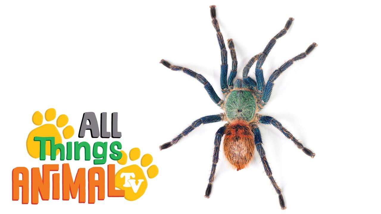 Spiders  Animals For Children  Kids Videos  Kindergarten
