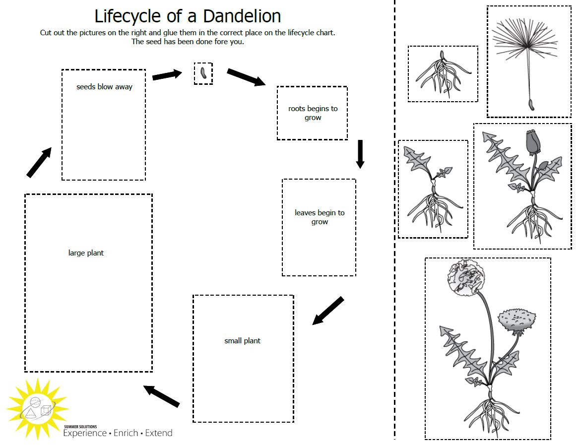 29 Images Of Life Cycle Of Plants Blank Template