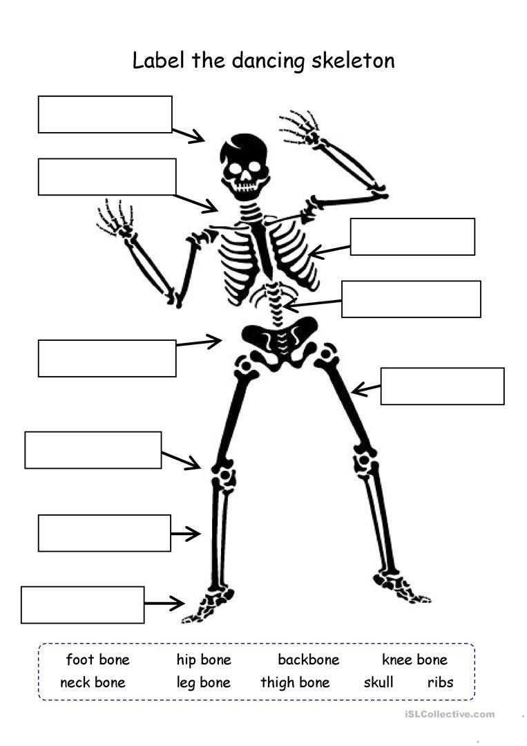 8 Free Esl Bones Worksheets