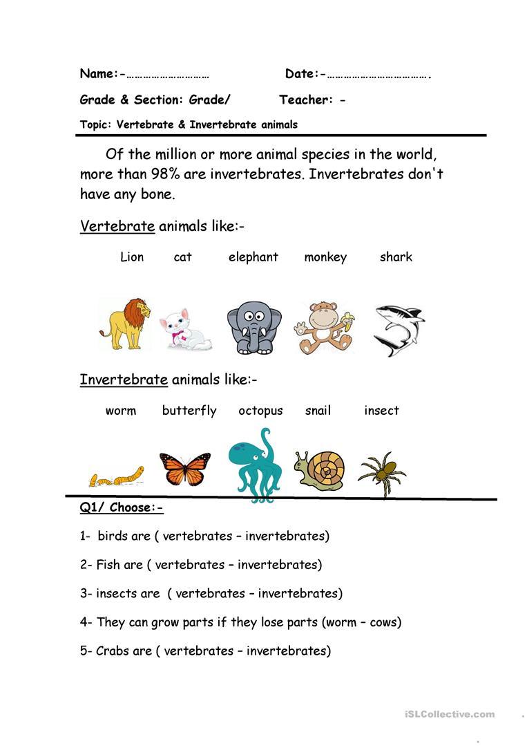 9 Free Esl Vertebrate Worksheets