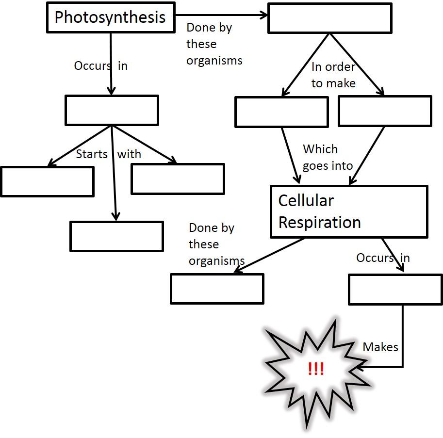 Worksheets Photosynthesis Diagram Worksheet bio cp agenda school pinterest photosynthesis worksheets and school