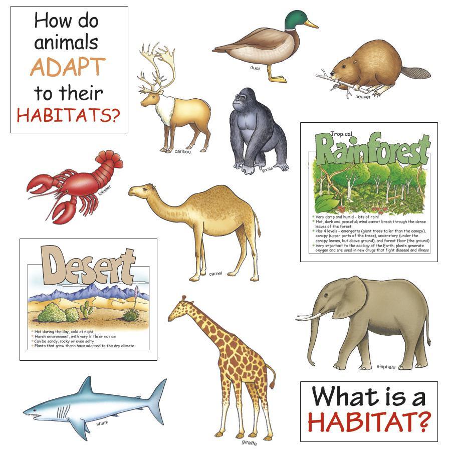 Bulletin Board Set Animal Habitats