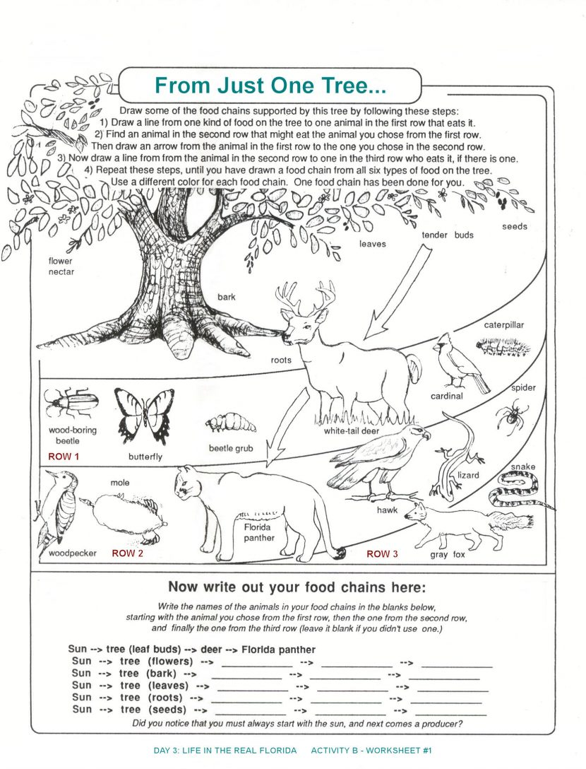 Ecological Pyramid Worksheet Energy Worksheets Middle Flow In