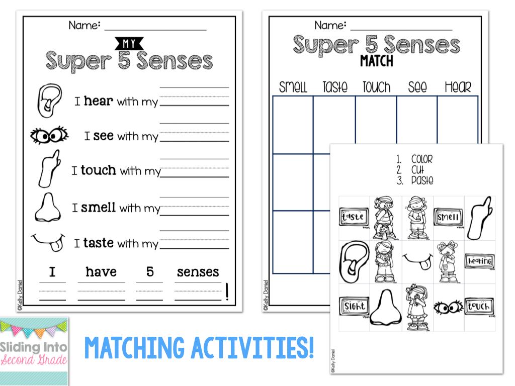 Five Sense Worksheet  New 989 Free Five Senses Cut And Paste