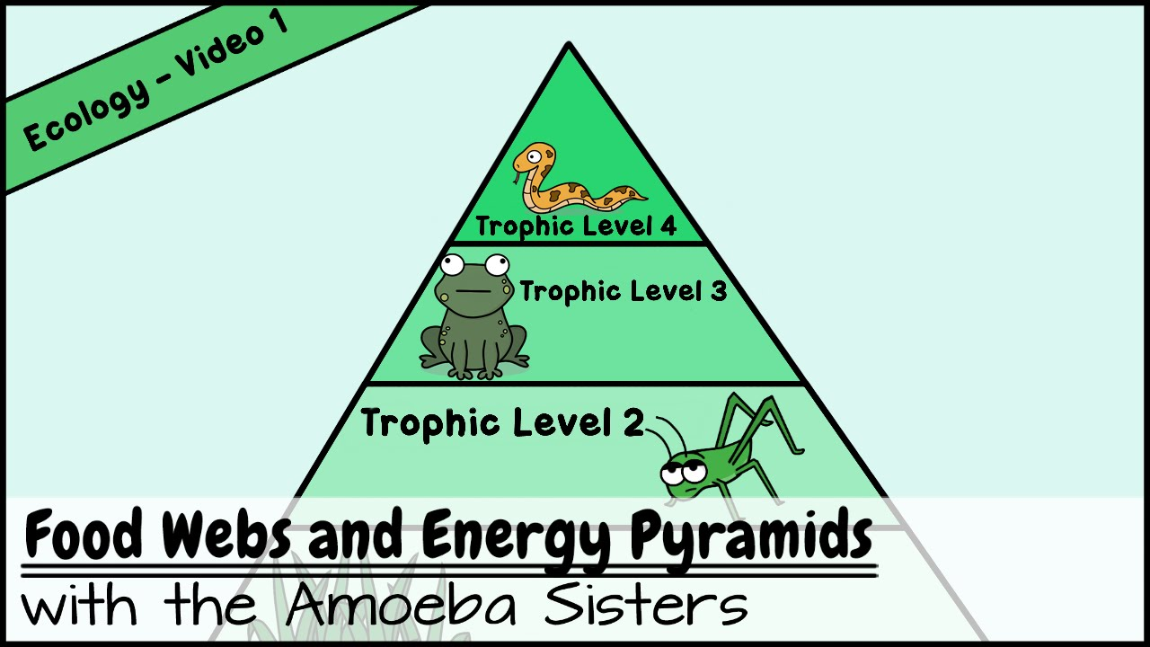 Food Webs And Energy Pyramids  Bedrocks Of Biodiversity