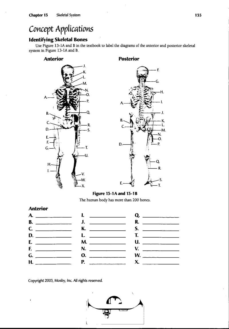 photograph about Printable Medical Terminology Worksheets referred to as Printable Cna Worksheets