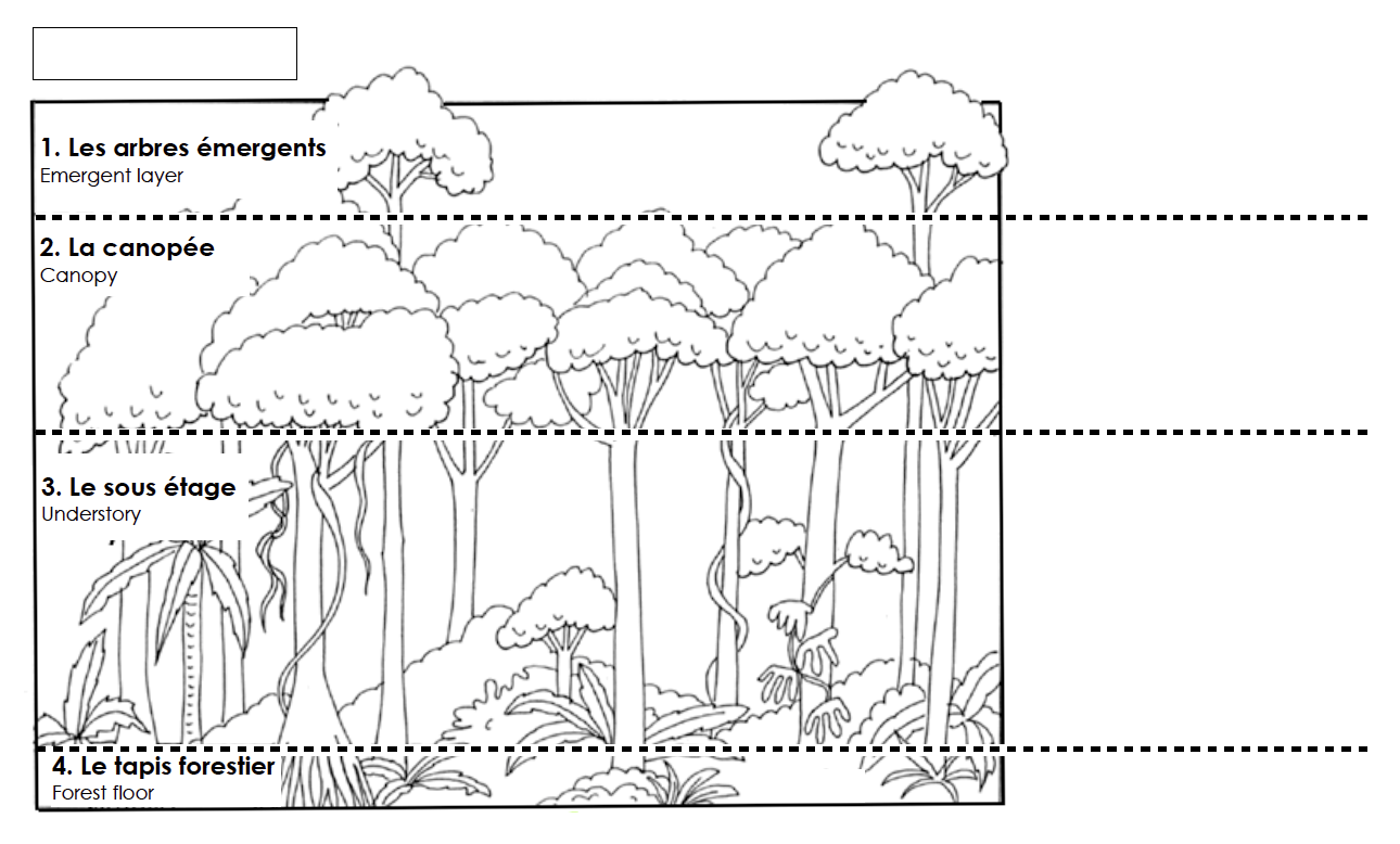 image about Layers of the Rainforest Printable known as Rainforest Levels Worksheets