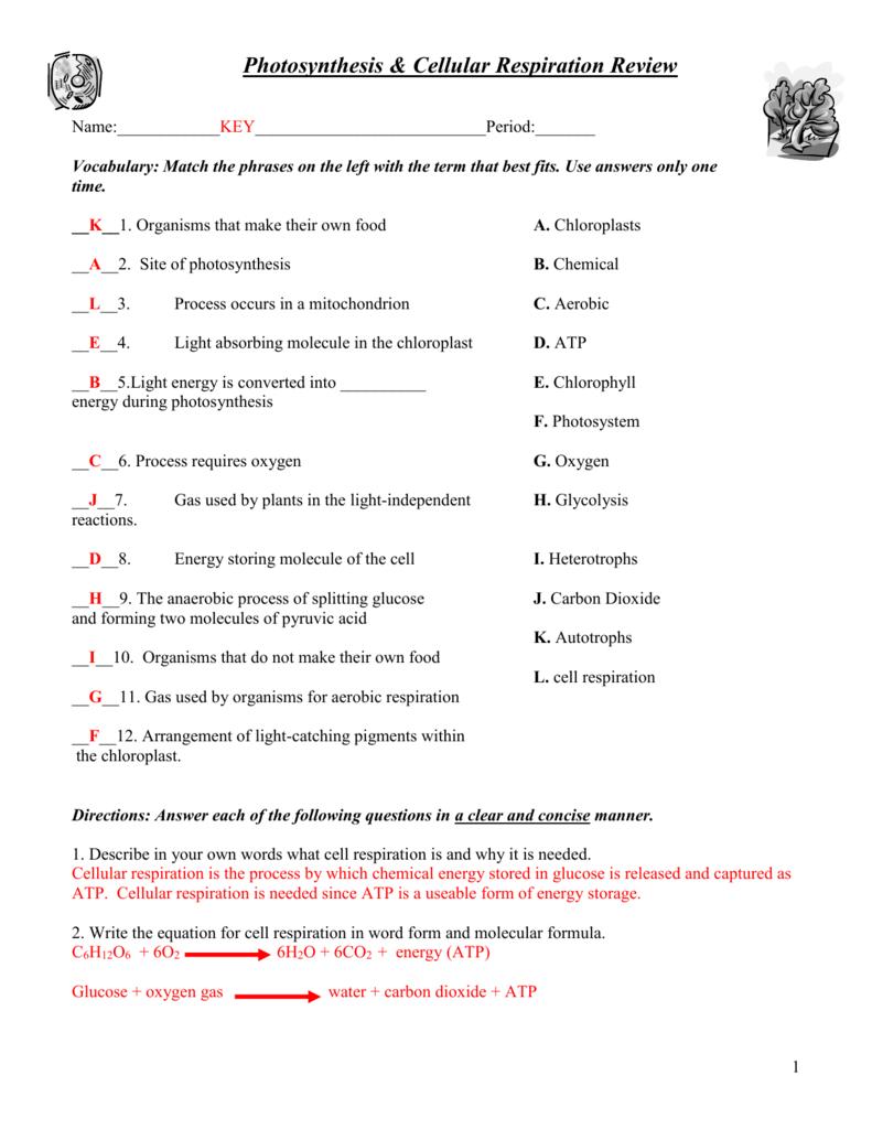 Photosynthesis & Cellular Respiration Worksheet