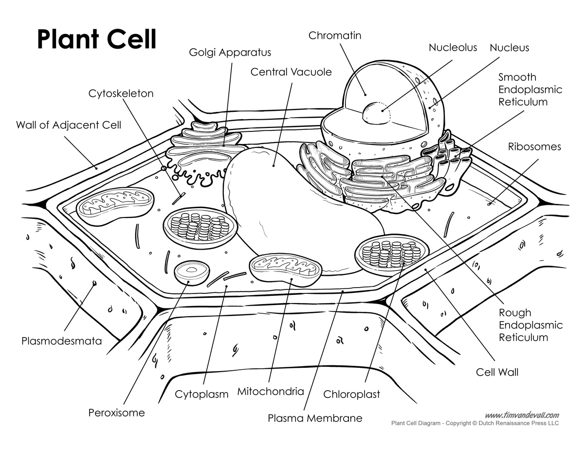 Plant Cell Label Worksheet Free Worksheets Library