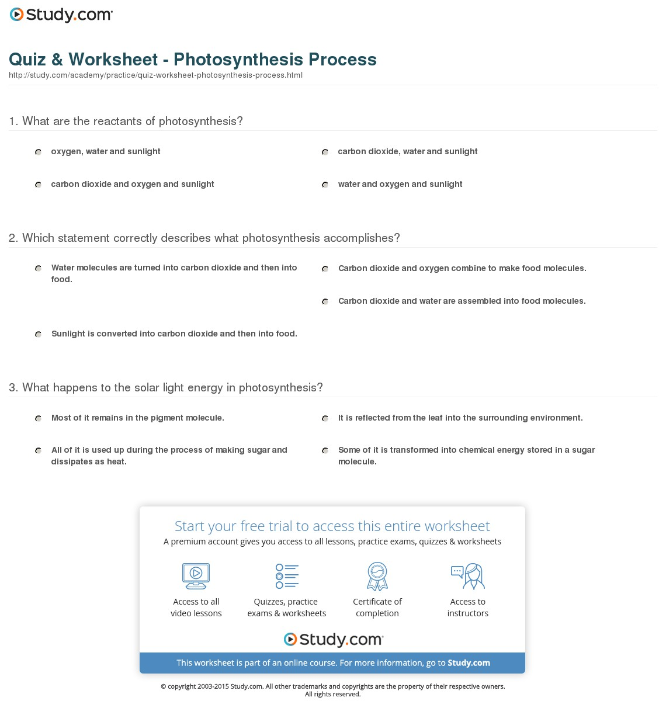 Quiz Worksheet Photosynthesis Process Stud