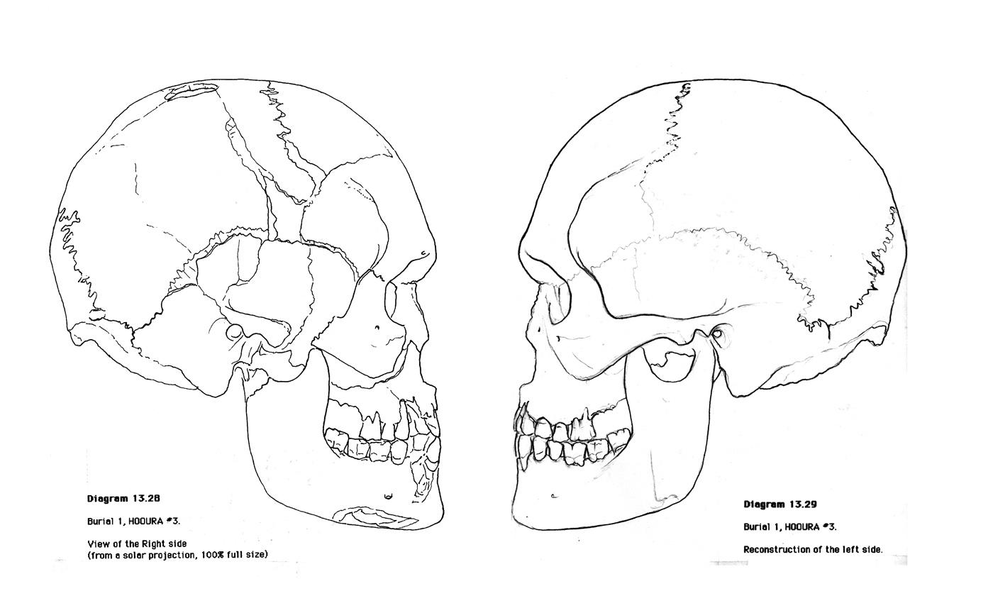 Skull Worksheet Free Worksheets Library