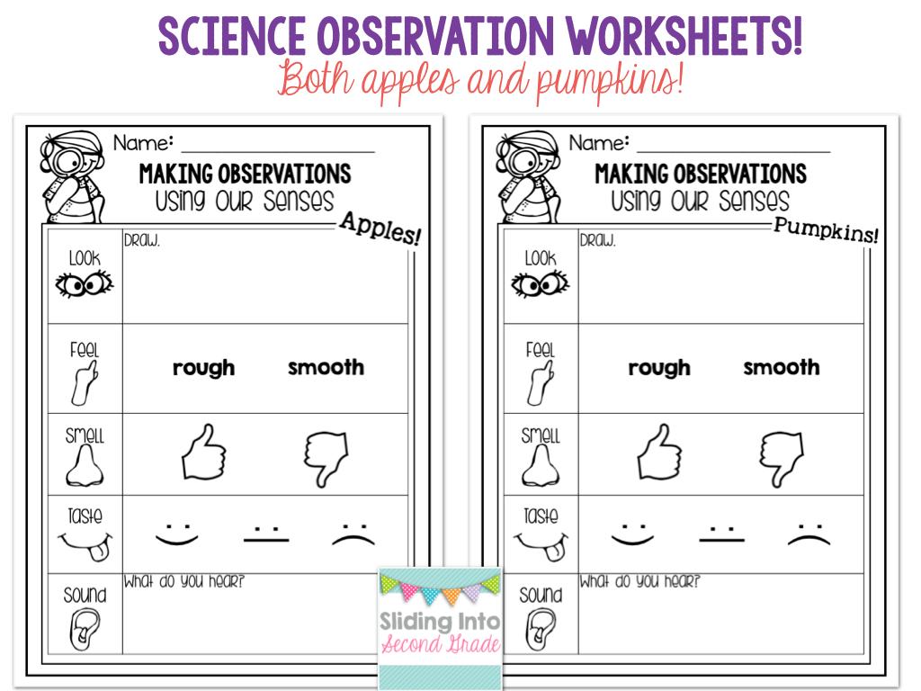 Updated 5 Senses Packet Apples And Pumpkins Observation Forms