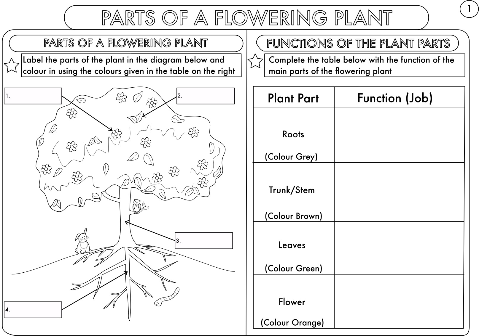 Year 3 Science  Plants Topic Worksheets By Beckystoke