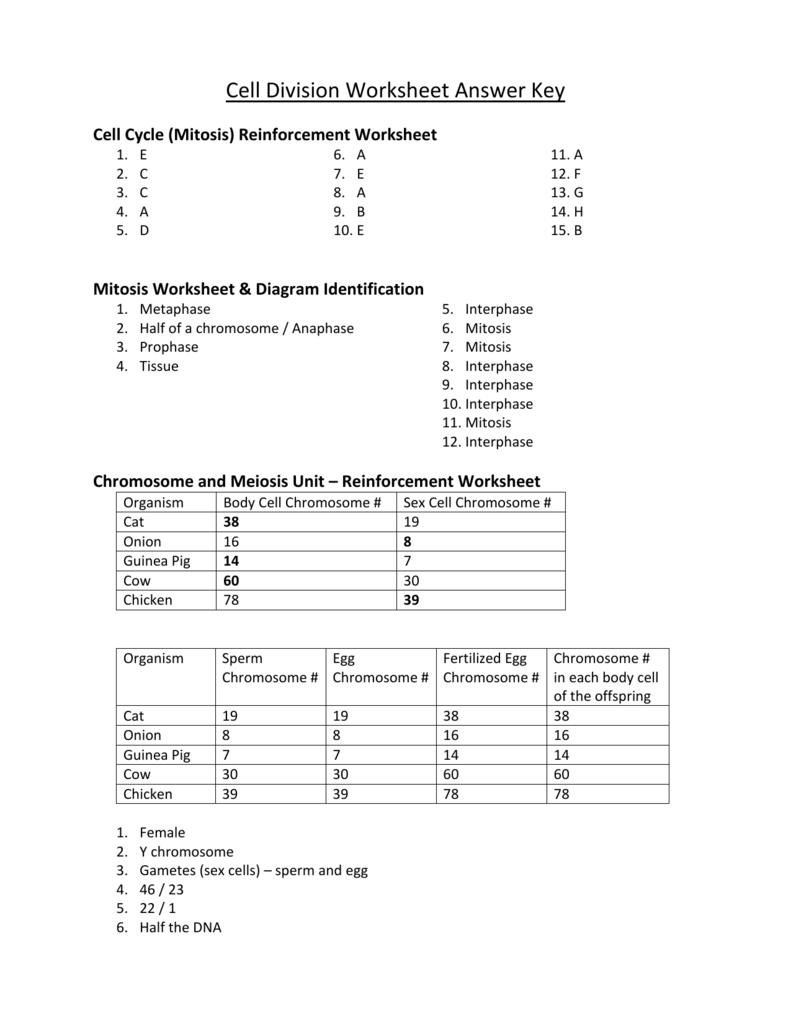 Chromosomes And Meiosis Unit Reinforcement Worksheets Answer Key