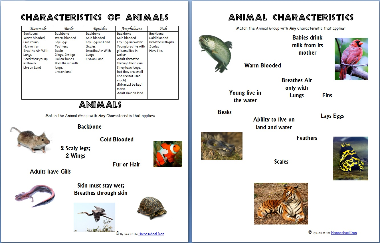 Animal Characteristic Worksheets