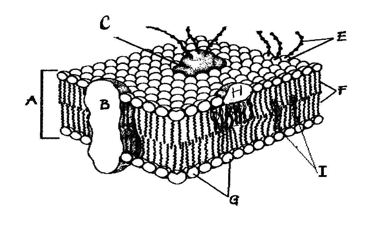 Behr, John   Biology Chapter 3