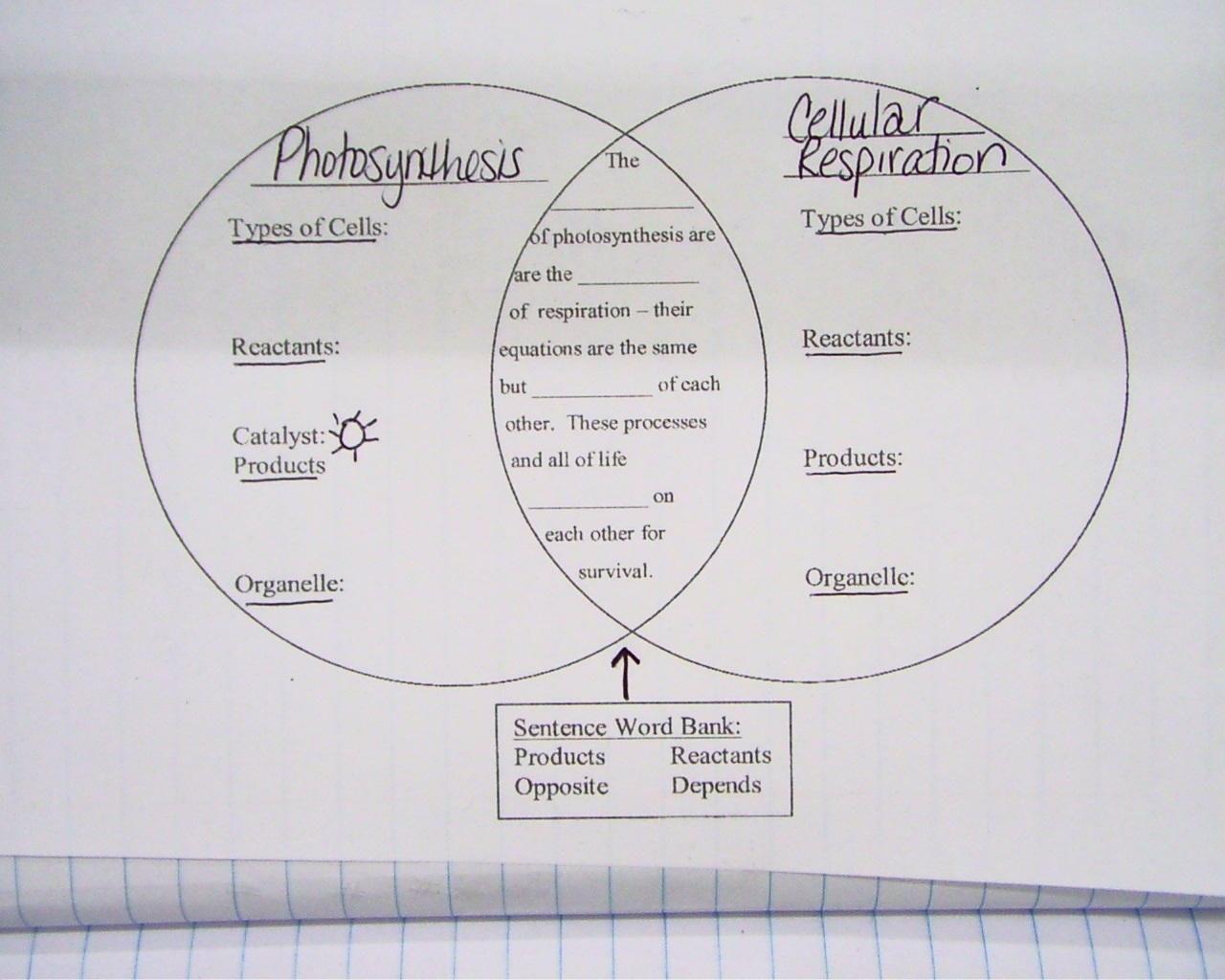 Cellular Respiration Diagram Worksheet Worksheets For All