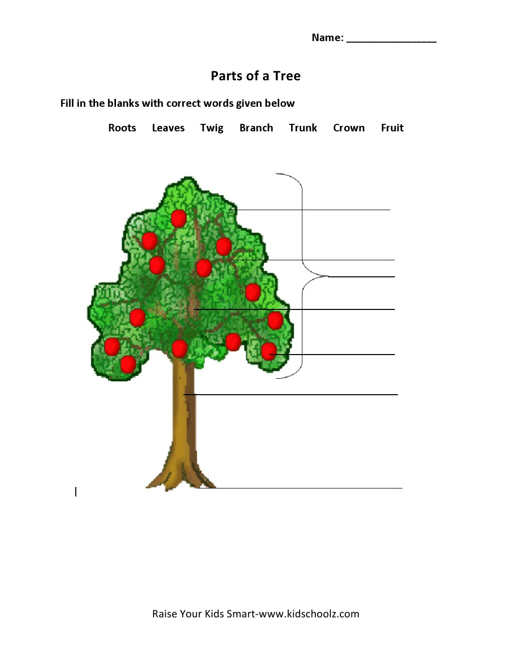 Grade 2 – Parts Of A Tree Worksheet 2