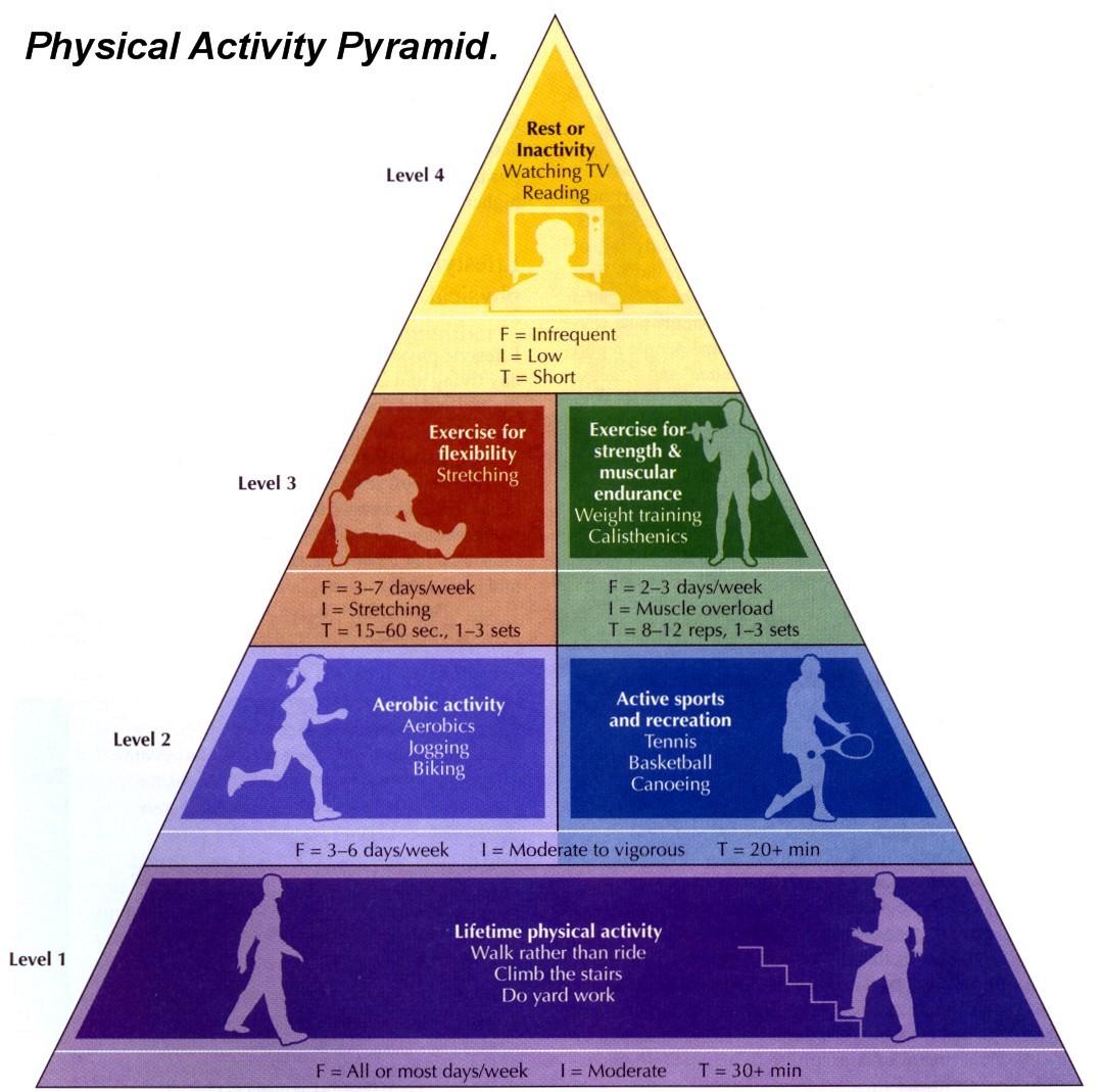 Grade 9 10 Fitness Portfolio