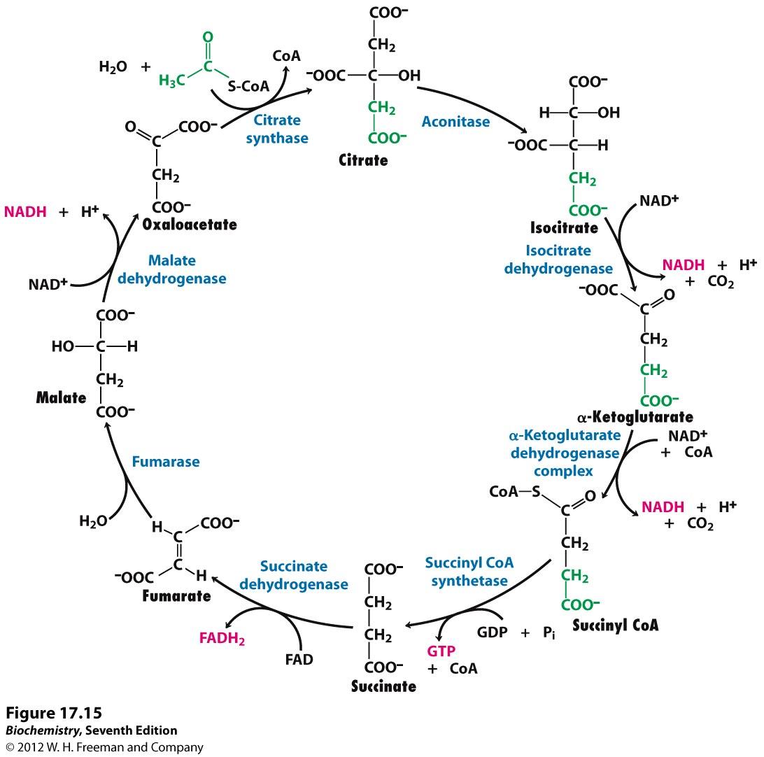 Kevin Ahern's Biochemistry (bb 451 551) At Oregon State University