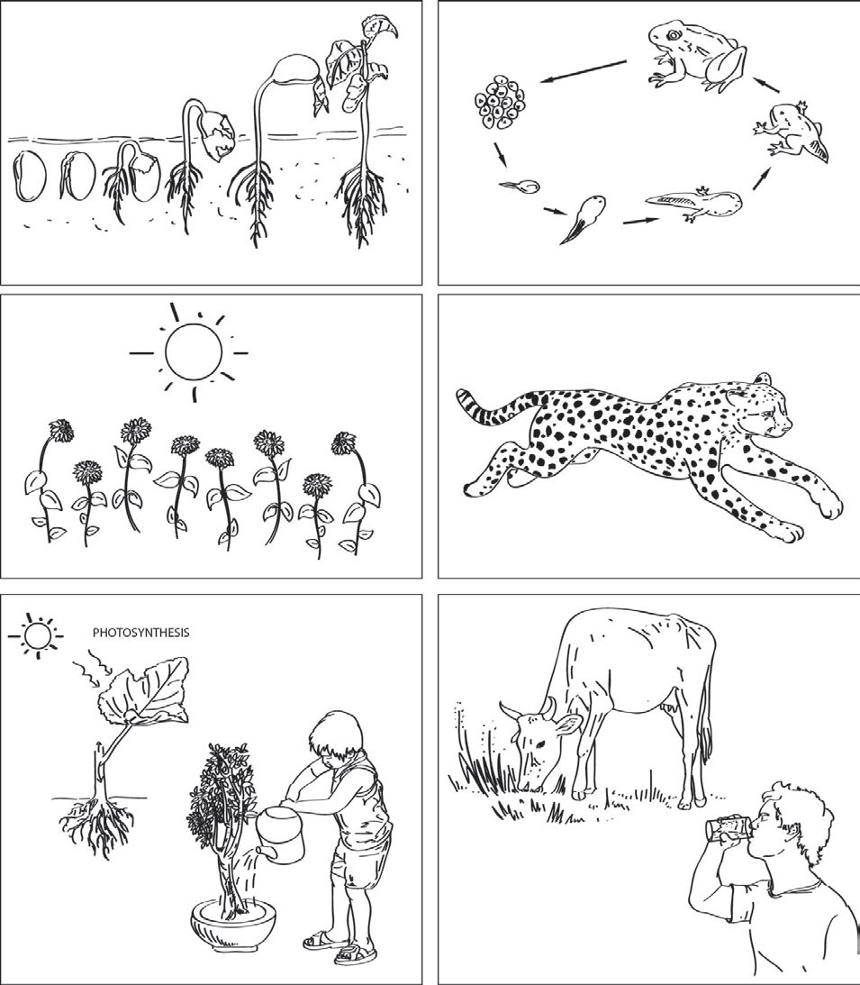 Living Things Worksheet Worksheets For All