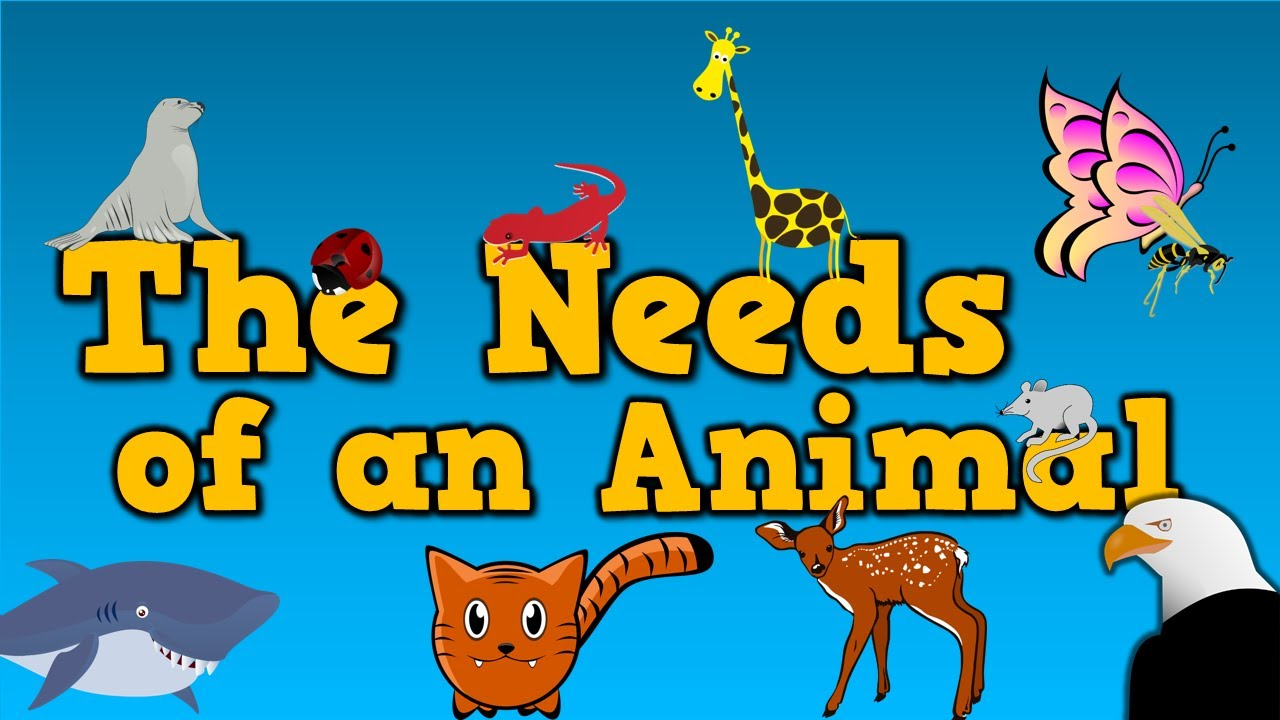 The Needs Of An Animal (song For Kids About 4 Things Animals Need