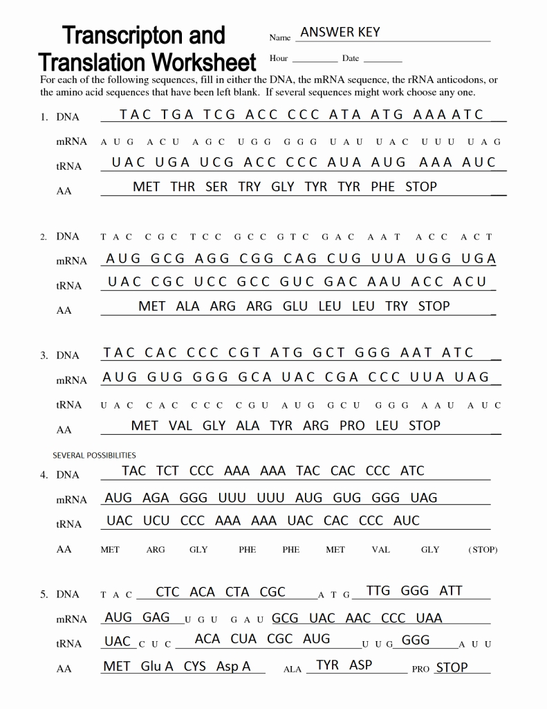 Transcription And Translation Worksheet Answers