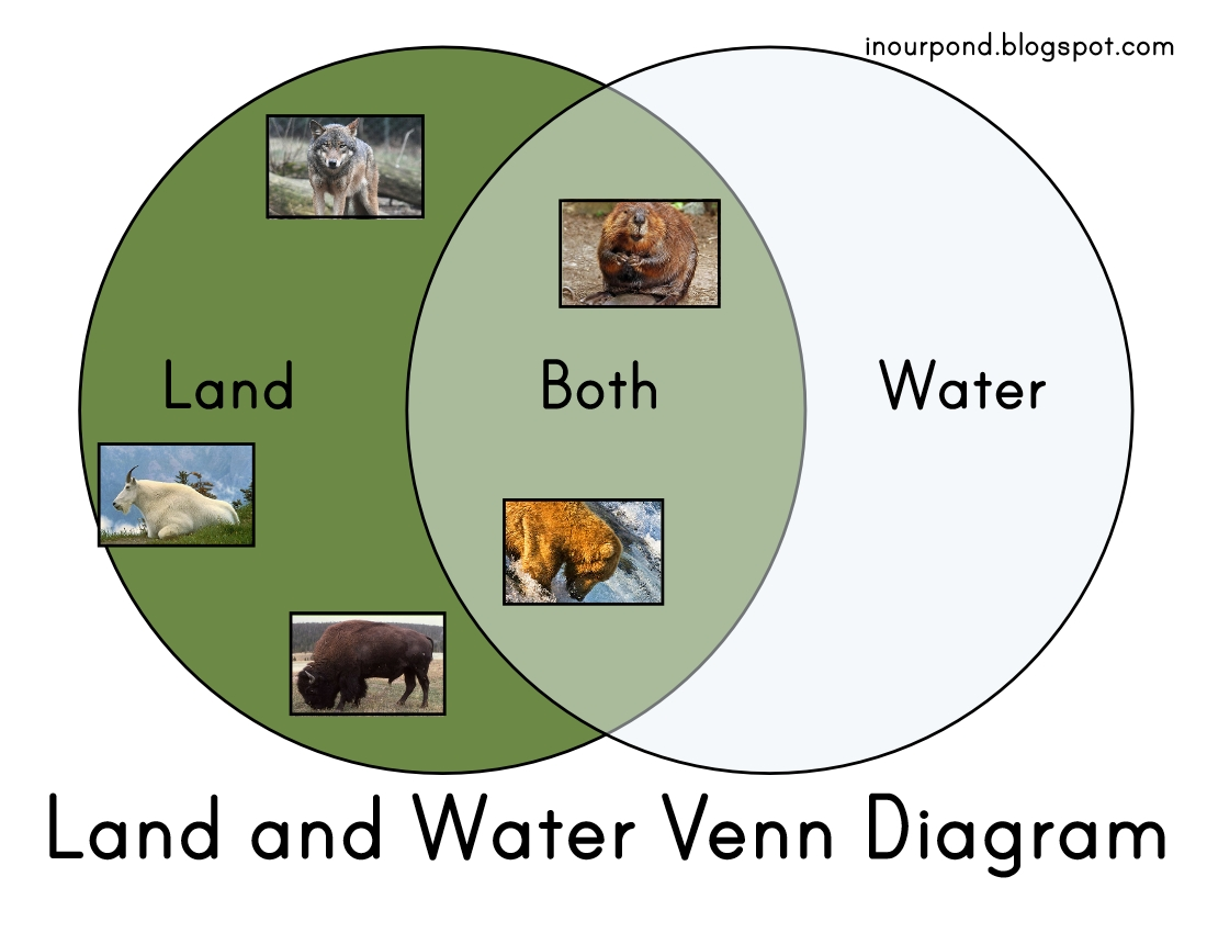 Water And Land Animals Worksheet