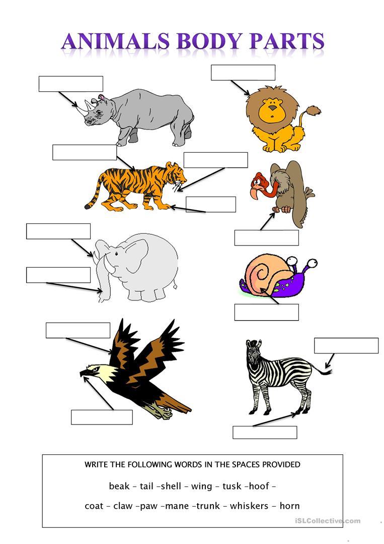 36 Free Esl Animal Body Parts Worksheets