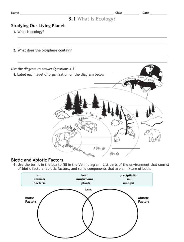 ecological levels of organization worksheets. Black Bedroom Furniture Sets. Home Design Ideas