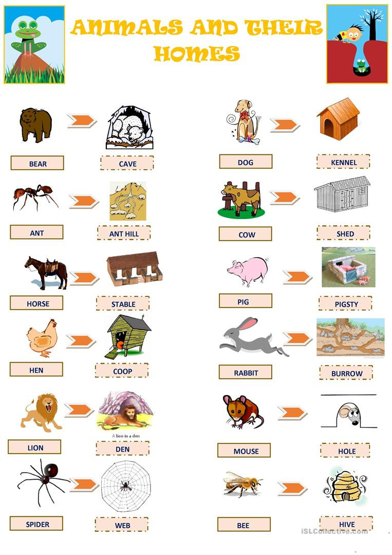 Animals And Their Homes Worksheet