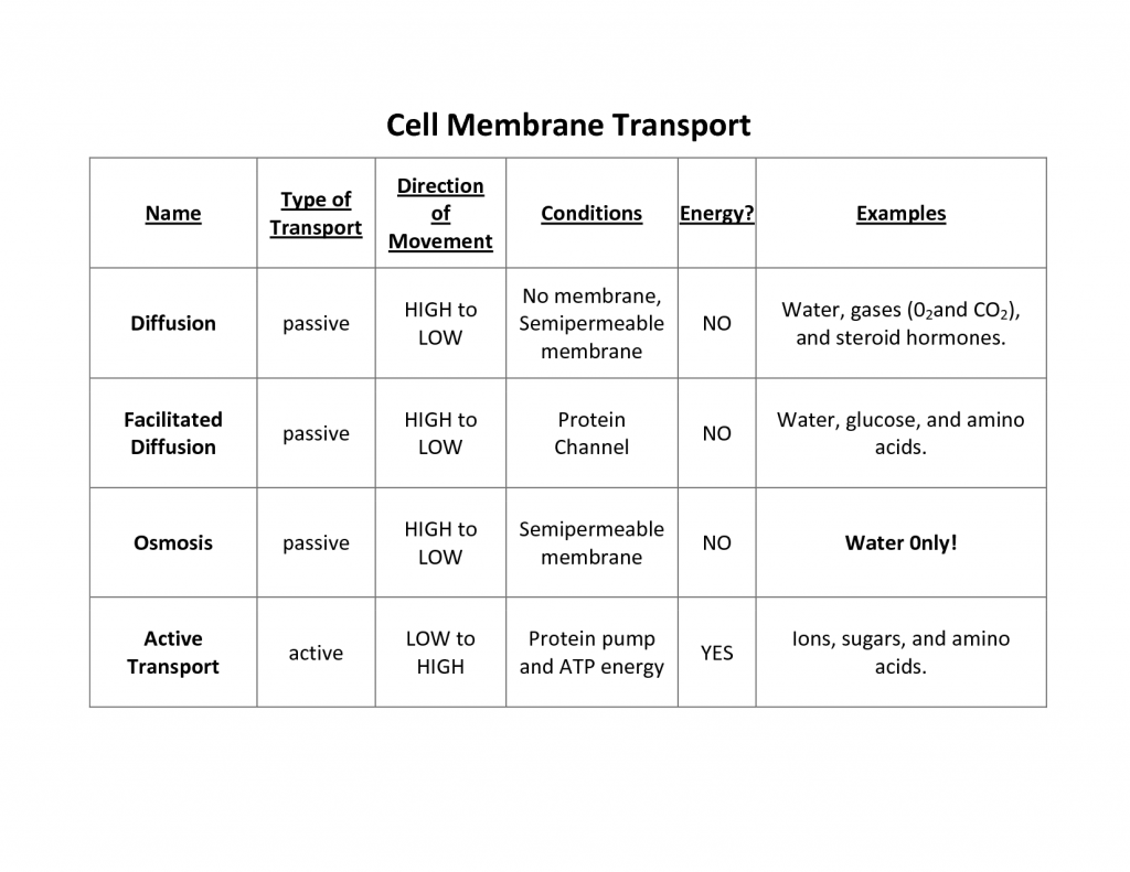 Cell Membrane Worksheet Answers Osmosis Is What Type Of Transport