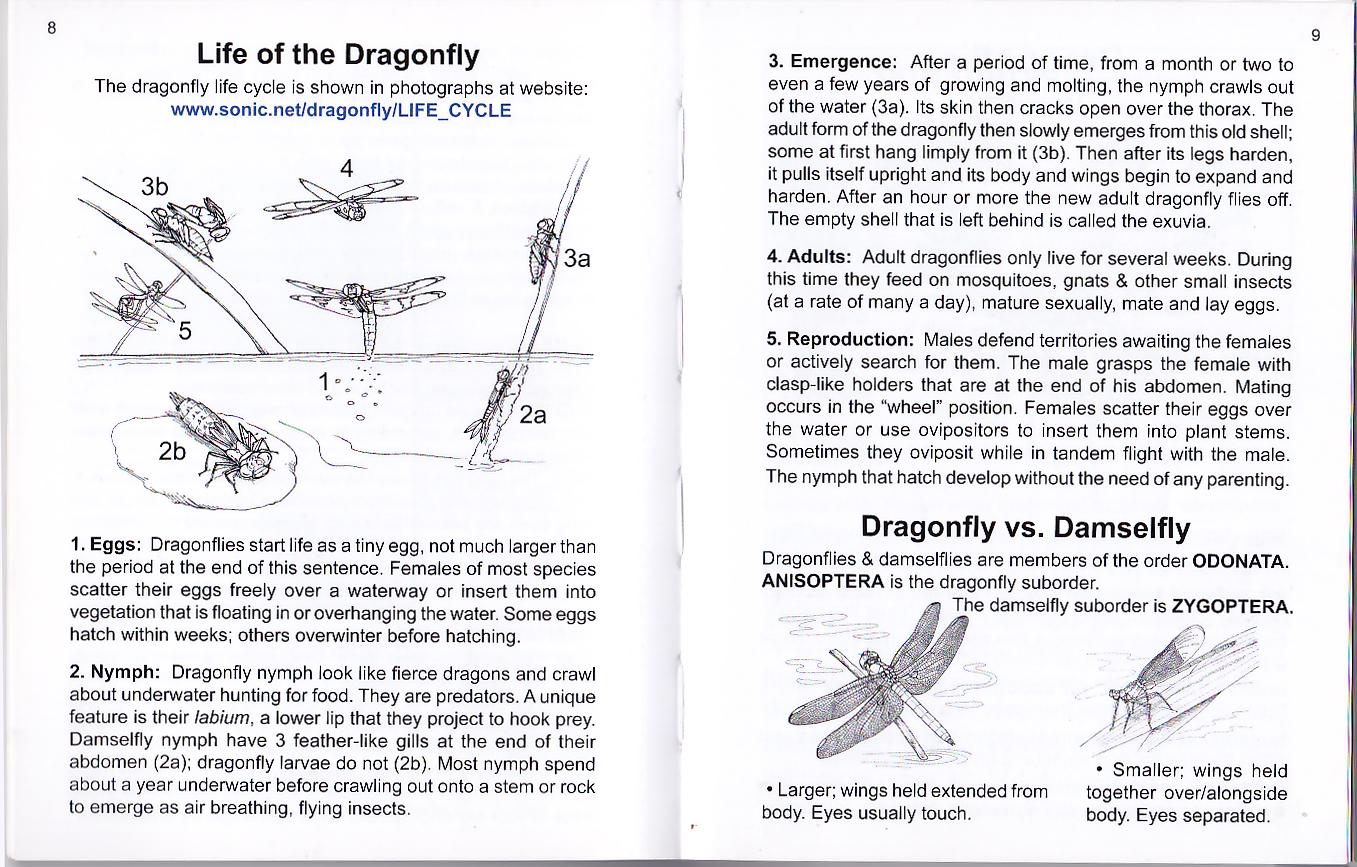 Common Dragonflies Of California