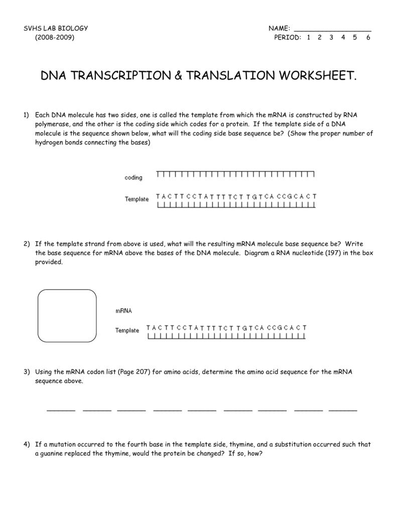 Dna Transcription & Translation Worksheet