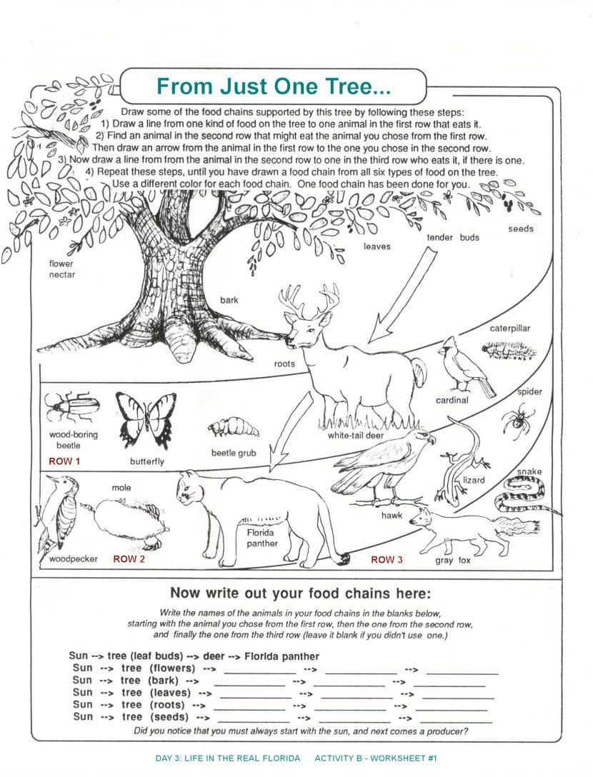 Ecosystem Worksheet Middle School Worksheets For All