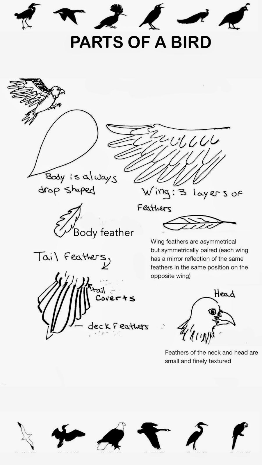 Fish Body Parts Worksheet For Kindergarten