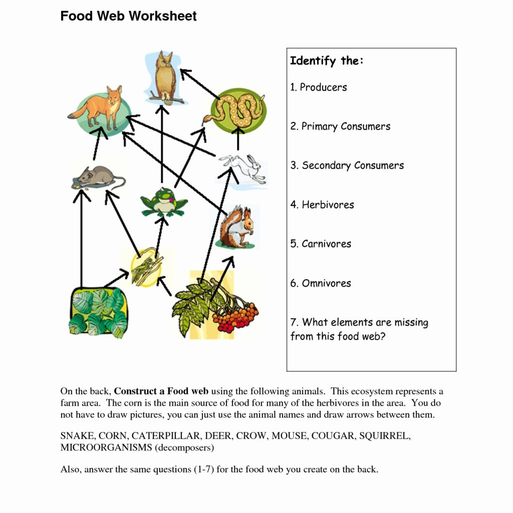 Food Chains And Food Webs Worksheet Answers   Worksheets ...