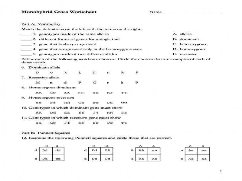 Monohybrid Cross Worksheets