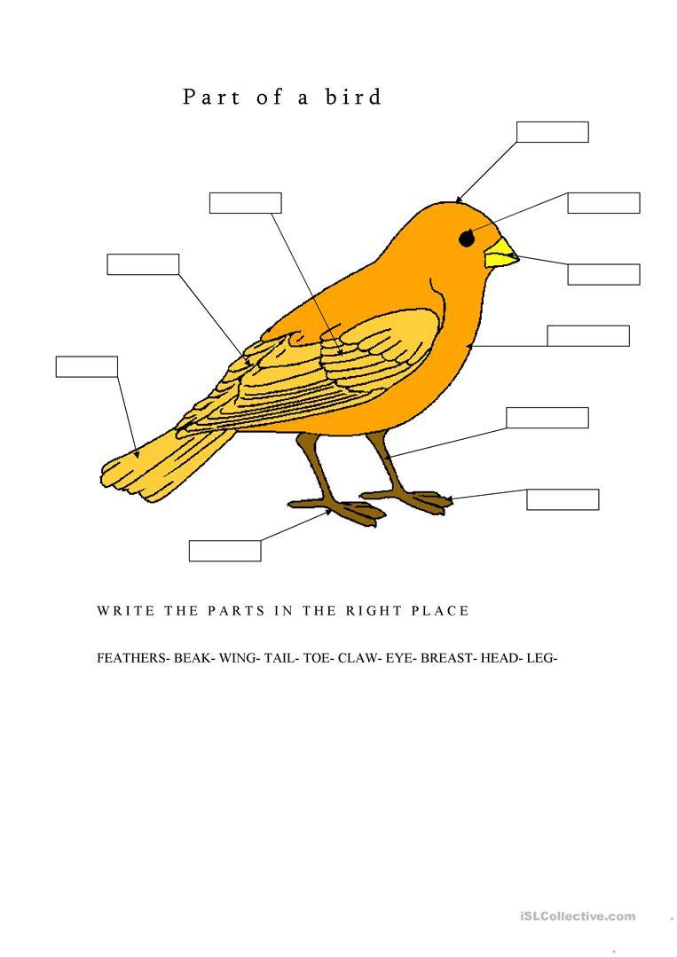 Parts Of A Bird Worksheet
