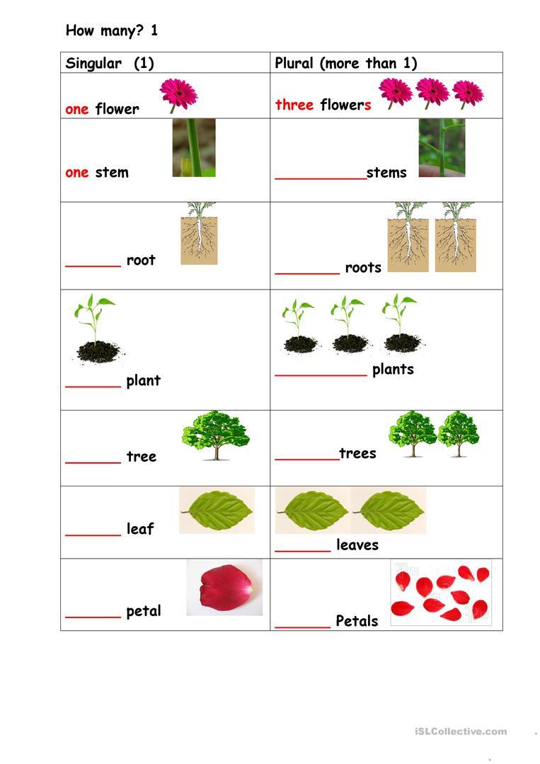 Plants Singular Plural Worksheet
