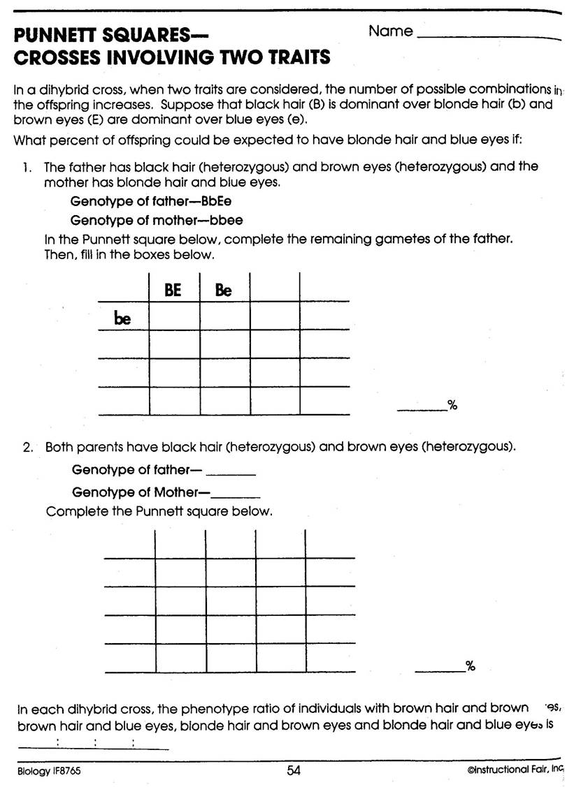 Dihybrid Punnett Square Worksheets