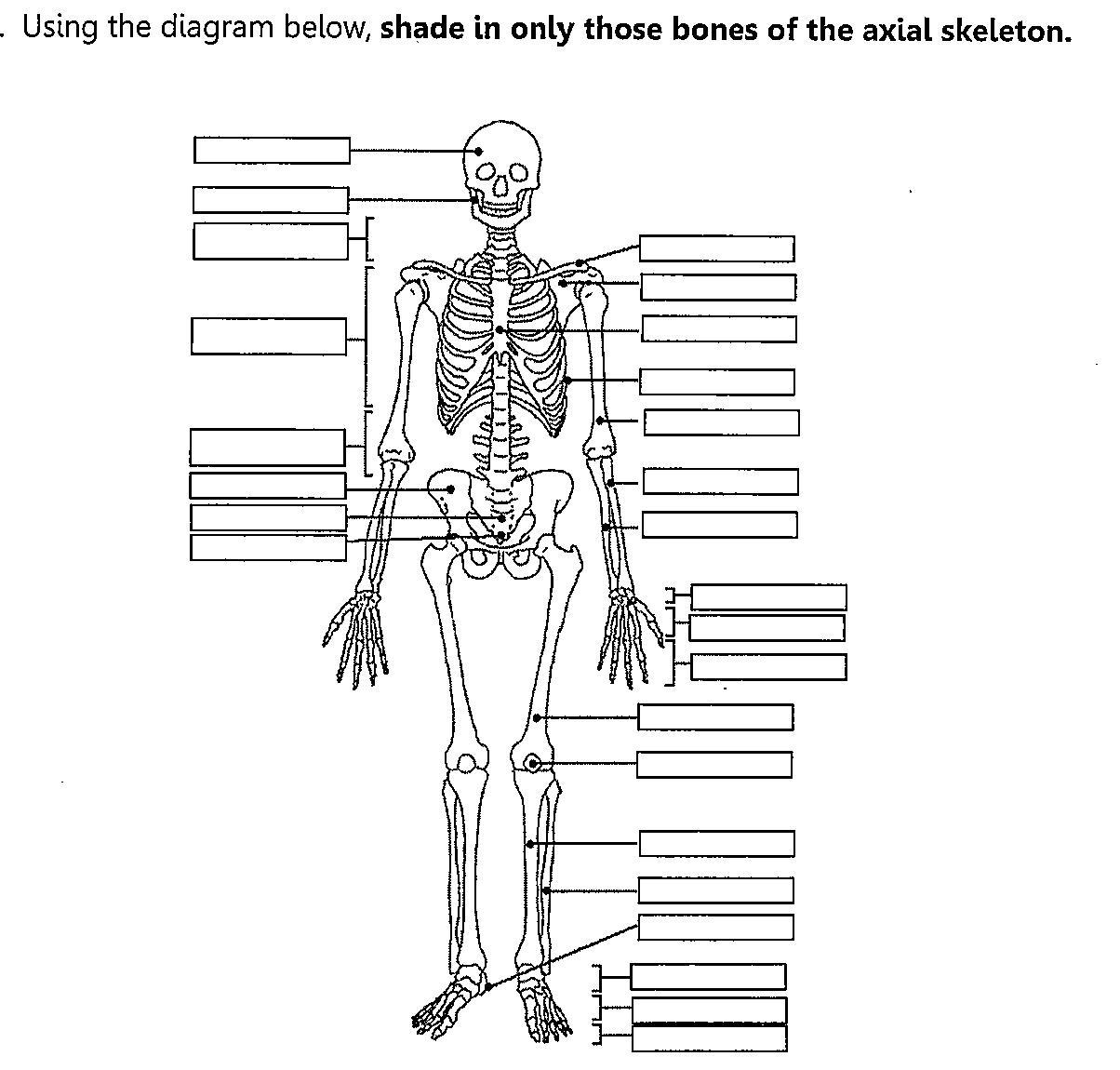 Skeletal System Fill In The Blank Worksheet Worksheets For All