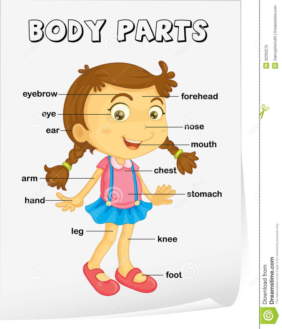 Teacher Marian Andújar  Parts Of The Body