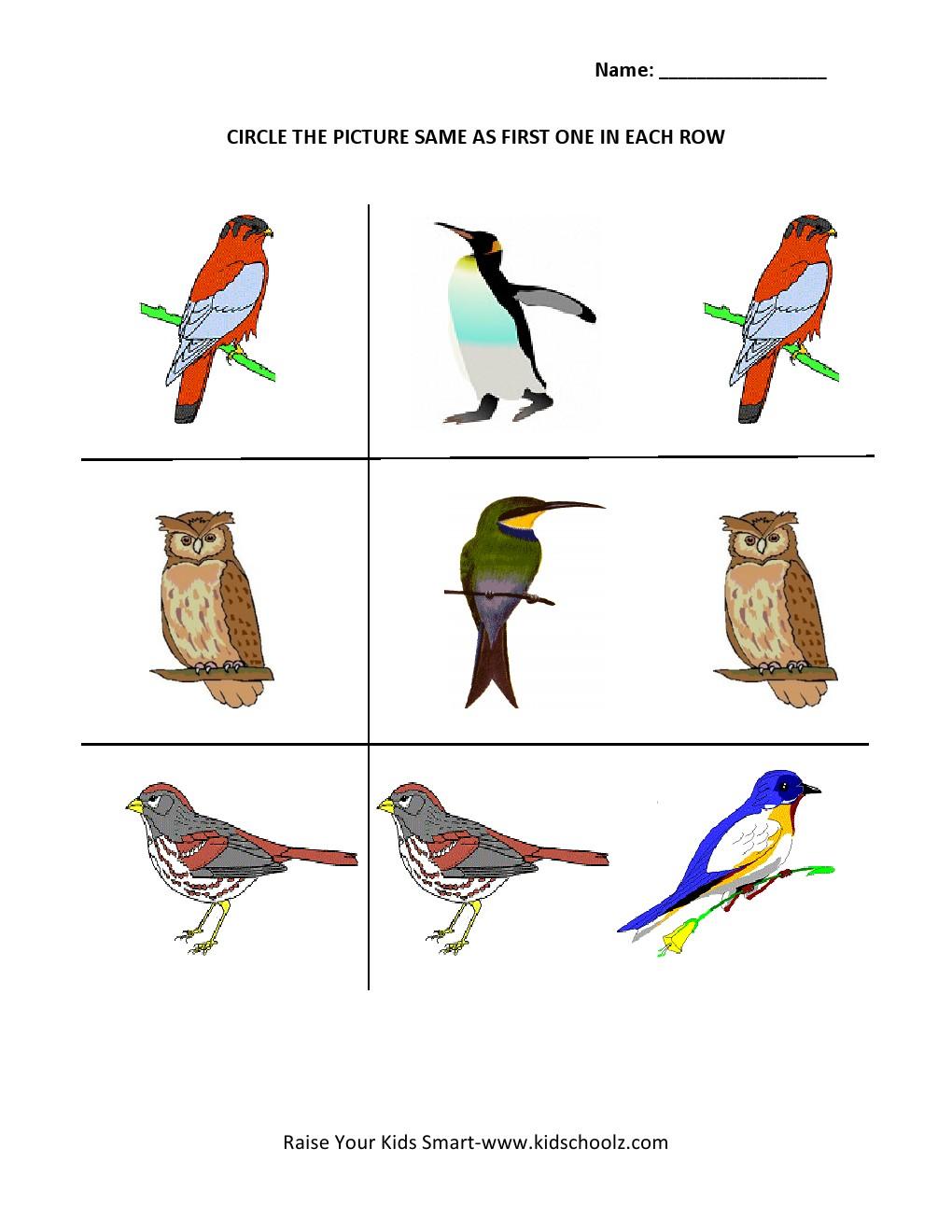 Worksheet  Bird Worksheets  Grass Fedjp Worksheet Study Site