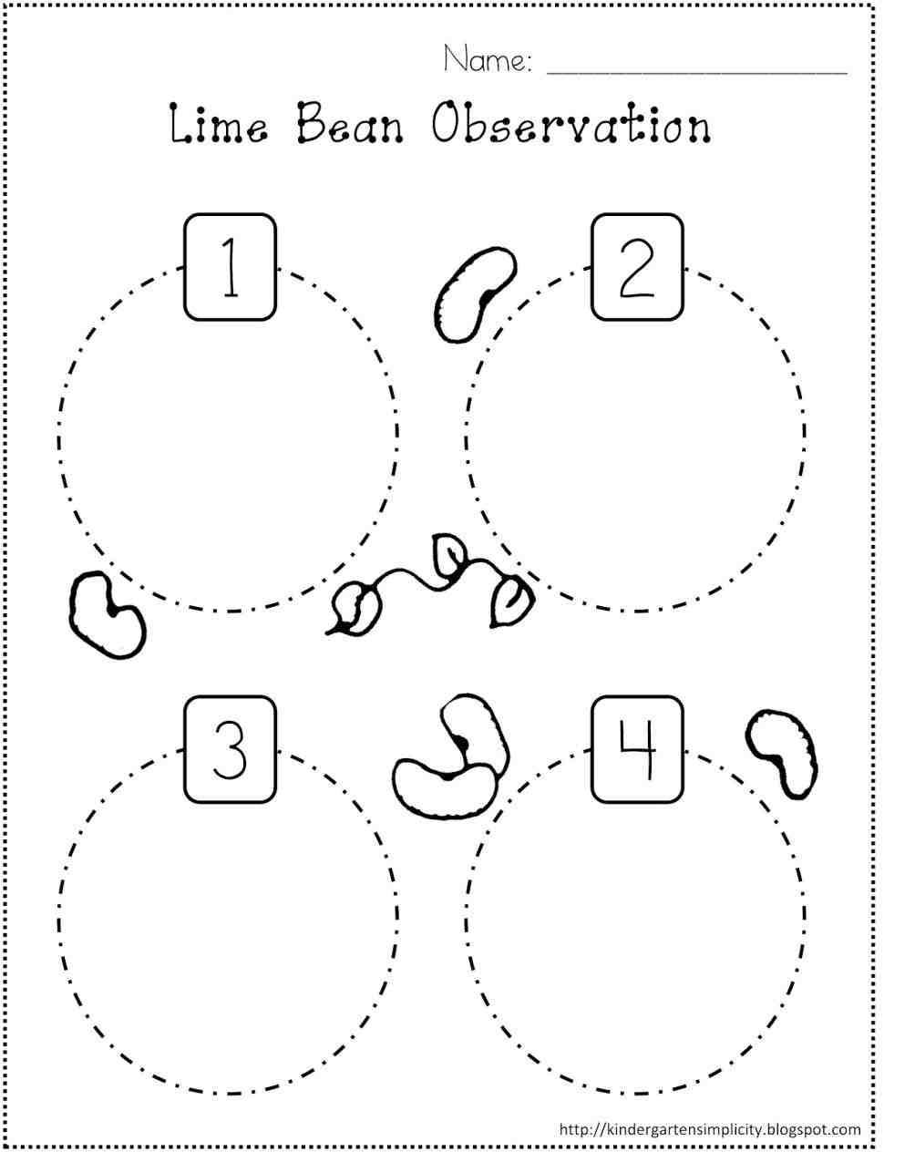 Worksheet  Life Cycle Worksheets  Grass Fedjp Worksheet Study Site