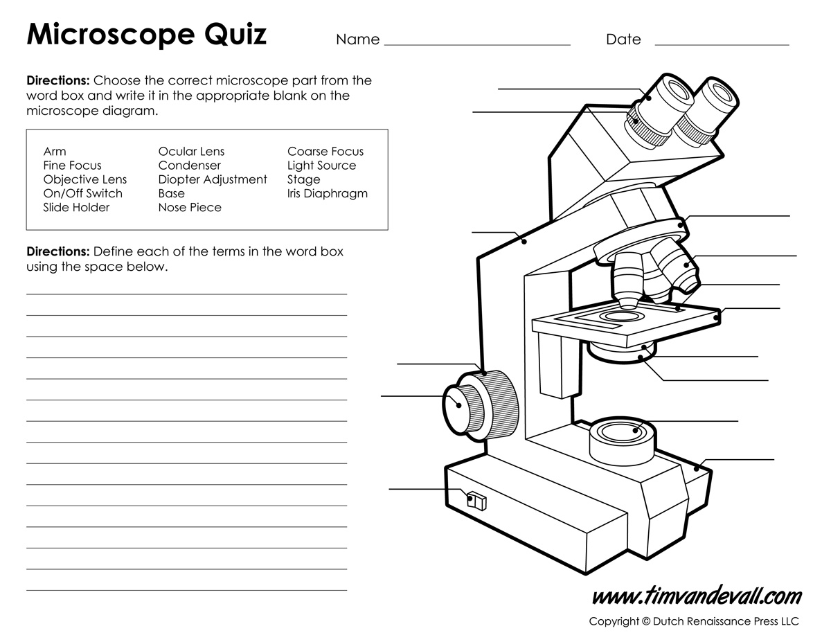 Worksheet  Microscope Worksheets  Grass Fedjp Worksheet Study Site